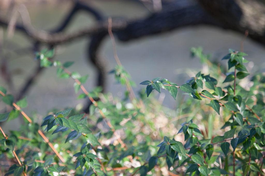 K&F ConceptのCPLフィルターの偏光をきかせて撮影した葉っぱの写真