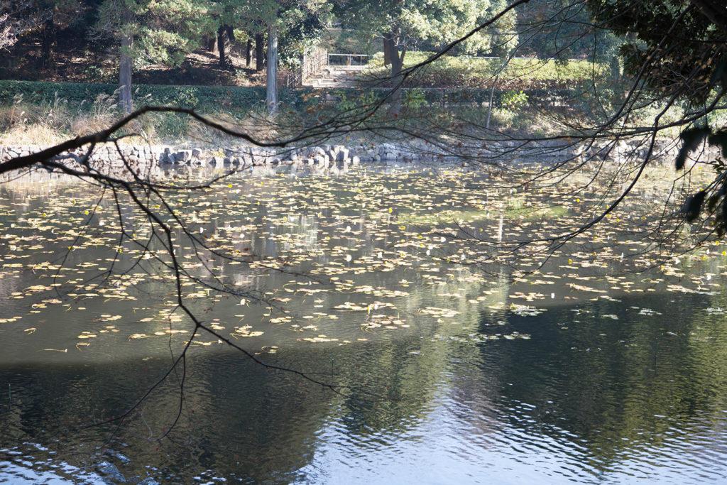 K&F ConceptのCPLフィルターの偏光なしで撮影した池の写真