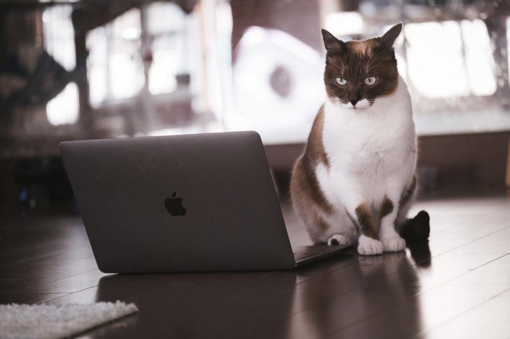 Macユーザーにもwindowsを使わなければならないときもある